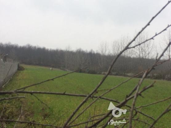 فروش زمین باغی12000 متر در آمل در گروه خرید و فروش املاک در مازندران در شیپور-عکس1