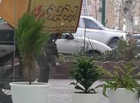 به پیک موتوری نیازمندیم. در شیپور-عکس کوچک