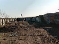 فروش دامداری و کشاورزی 3200 متر در آمل در شیپور