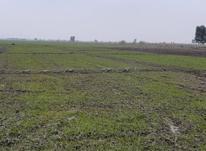 زمین کشاورزی در متراژ بالا در شیپور-عکس کوچک