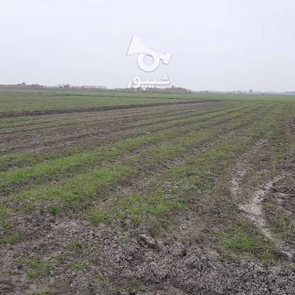 زمین کشاورزی در متراژ بالا در گروه خرید و فروش املاک در مازندران در شیپور-عکس4