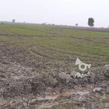 زمین کشاورزی در متراژ بالا در گروه خرید و فروش املاک در مازندران در شیپور-عکس3