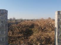 باغچه و زمین 450 متر در شهریار در شیپور-عکس کوچک