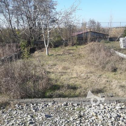 فروش زمین مسکونی 322 متر در علی آباد بابلسر در گروه خرید و فروش املاک در مازندران در شیپور-عکس1
