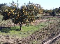 فروش زمین کشاورزی 170000 متر مربع کیلومتر 8ساری در شیپور-عکس کوچک