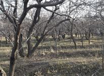 500 متر باغ  کردزار  دو بحر سند تکبرگ  در شیپور-عکس کوچک