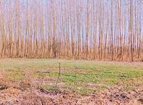 فروش زمین مسکونی 320 متر در آستانه اشرفیه در شیپور-عکس کوچک