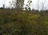 فروش زمین مسکونی 2900 متر در چکوسرچهارراه نجفی شفت در شیپور-عکس کوچک