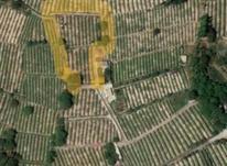 یک قطعه باغ انگور در شیپور-عکس کوچک
