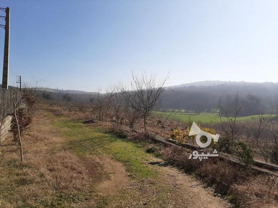 فروش زمین کشاورزی 37000 متر   در گروه خرید و فروش املاک در مازندران در شیپور-عکس4