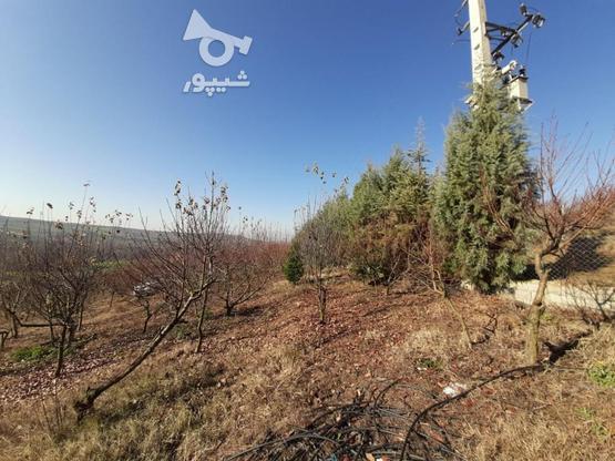 فروش زمین کشاورزی 37000 متر   در گروه خرید و فروش املاک در مازندران در شیپور-عکس2