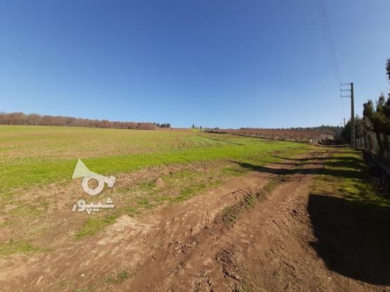 فروش زمین کشاورزی 37000 متر   در گروه خرید و فروش املاک در مازندران در شیپور-عکس5