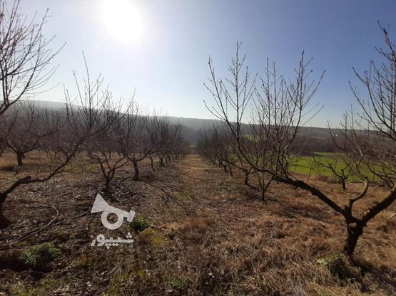 فروش زمین کشاورزی 37000 متر   در گروه خرید و فروش املاک در مازندران در شیپور-عکس6