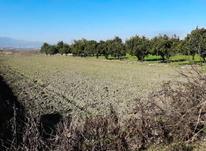 فروش زمین کشاورزی 2450 متر در آمل در شیپور-عکس کوچک