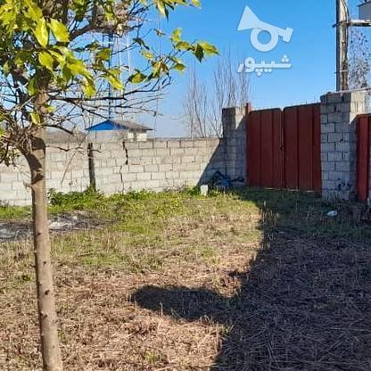 فروش زمین 900 متری با سوله پروانه بهره برداری در گروه خرید و فروش املاک در مازندران در شیپور-عکس9