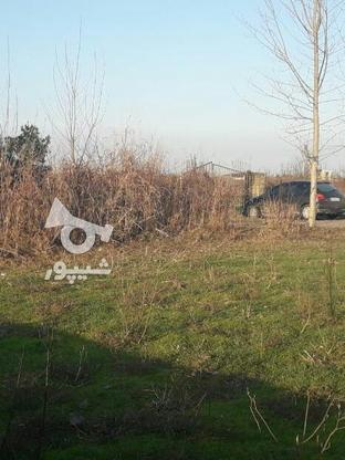 فروش زمین مسکونی 700 متر در آمل در گروه خرید و فروش املاک در مازندران در شیپور-عکس2