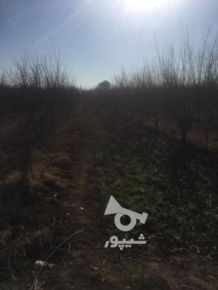 فروش باغچه 1000 متر در نظرآباد در گروه خرید و فروش املاک در البرز در شیپور-عکس4