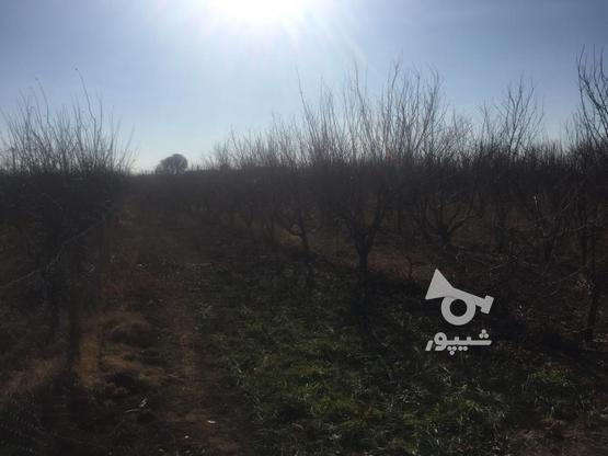 فروش باغچه 1000 متر در نظرآباد در گروه خرید و فروش املاک در البرز در شیپور-عکس6