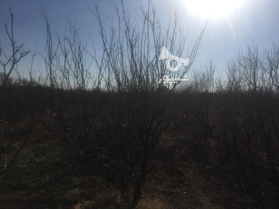 فروش باغچه 1000 متر در نظرآباد در گروه خرید و فروش املاک در البرز در شیپور-عکس7