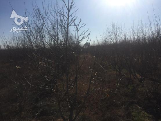 فروش باغچه 1000 متر در نظرآباد در گروه خرید و فروش املاک در البرز در شیپور-عکس8