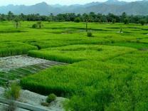 زمین کشاورزی آبی 200000 متری  در شیپور