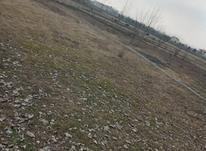 فروش زمین مسکونی 1000 متر در سیاهکل در شیپور-عکس کوچک