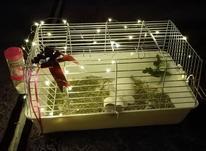 قفس خرگوش در حد نو در شیپور-عکس کوچک