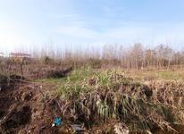 400 متر زمین باغی بر جاده  در شیپور-عکس کوچک