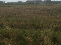 زمین کشاورزی 2000 متر در آستانه اشرفیه در شیپور-عکس کوچک