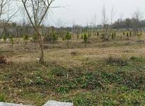 فروش زمین مسکونی 1000 متر در سلمان شهر در شیپور-عکس کوچک