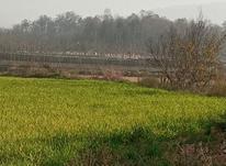 فروش زمین صنعتی 7000 متر در آمل در شیپور-عکس کوچک