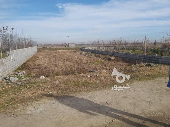 فروش زمین کشاورزی 327 متر در بابل در گروه خرید و فروش املاک در مازندران در شیپور-عکس3