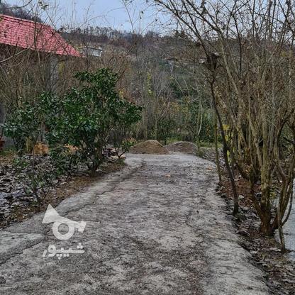 1000متر زمین در وارد محله در گروه خرید و فروش املاک در مازندران در شیپور-عکس1