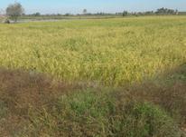 زمین کشاورزی 10000متری در آمل در شیپور-عکس کوچک