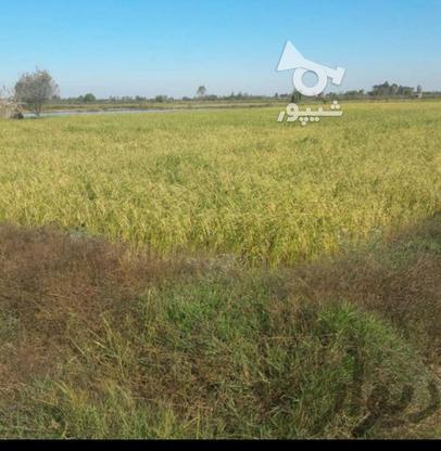 زمین کشاورزی 10000متری در آمل در گروه خرید و فروش املاک در مازندران در شیپور-عکس1