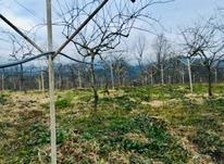 فروش زمین باغ مسکونی 1170 متر در جاده رشت به فومن در شیپور-عکس کوچک