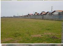 زمین مسکونی 6000 متری در منطقه توریستی مرزیکلا در شیپور-عکس کوچک