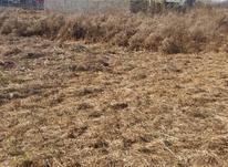 250 متر زمین داخل طرح هادی در نخجیر در شیپور-عکس کوچک