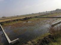 دو قطعه زمین مسکونی 180 متری داخل بافت در بابلسر در شیپور-عکس کوچک