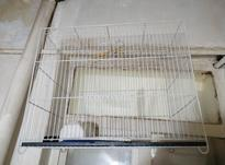 قفس پرنده بزرگ  در شیپور-عکس کوچک