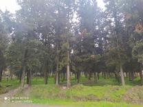 زمین مسکونی شهرک آزادگان 180 متری در شیپور
