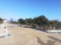 فروش زمین  شهرکی ٣٠٠متری  نوشهر  نخ شمال  در شیپور-عکس کوچک