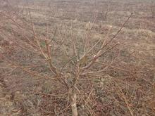 هرس درخت و طراحی باغ در شیپور