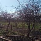 فروش زمین کشاورزی 7800 متر در آستانه اشرفیه
