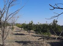 فروش زمین کشاورزی 6500 متر در محمودآباد در شیپور-عکس کوچک