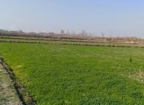 زمین کشاورزی 20000 متری در امل در شیپور-عکس کوچک