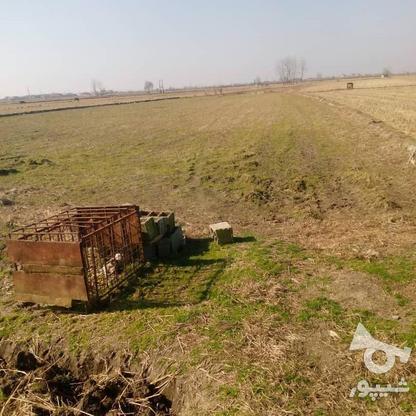 فروش زمین کشاورزی 7000 متر در فریدونکنار در گروه خرید و فروش املاک در مازندران در شیپور-عکس1