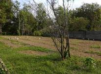 فروش زمین مسکونی 1000 متر در آستانه اشرفیه در شیپور-عکس کوچک