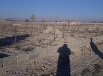 فروش زمین کشاورزی 700 متر در ملارد در شیپور-عکس کوچک