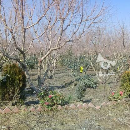 فروش فوری باغ 13 هکتاری در گروه خرید و فروش املاک در مازندران در شیپور-عکس1